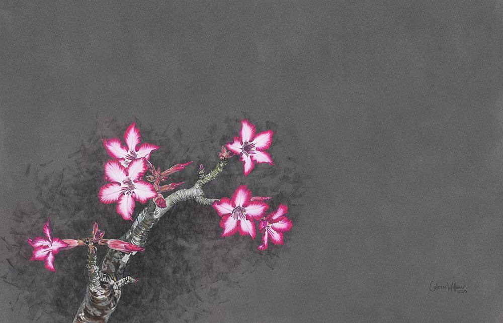 Coleen Williams - Desert Rose