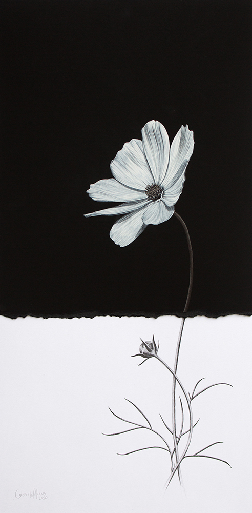 Coleen Williams - Just Cosmos 2